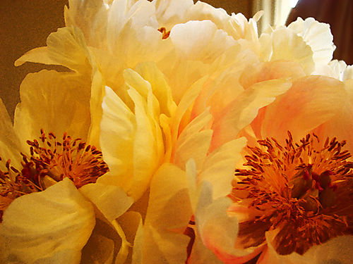 Peonies_Watercolor 2