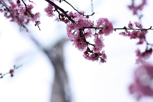 Spring-blossoms-jennifer-jeffrey-2009