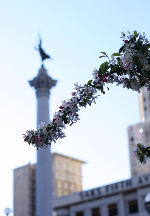 Spring in Union Square