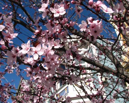 Spring_san_francisco
