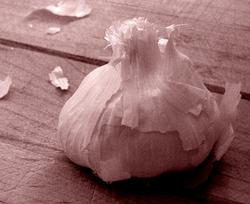 Garlic_bulb_sm